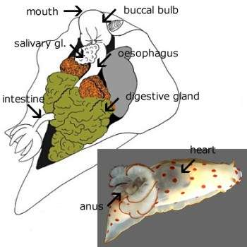 Slug Mouth Diagram - Auto Electrical Wiring Diagram •