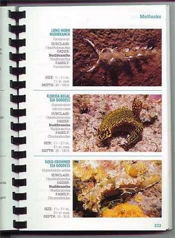 the sea slug forum reef creature identification florida